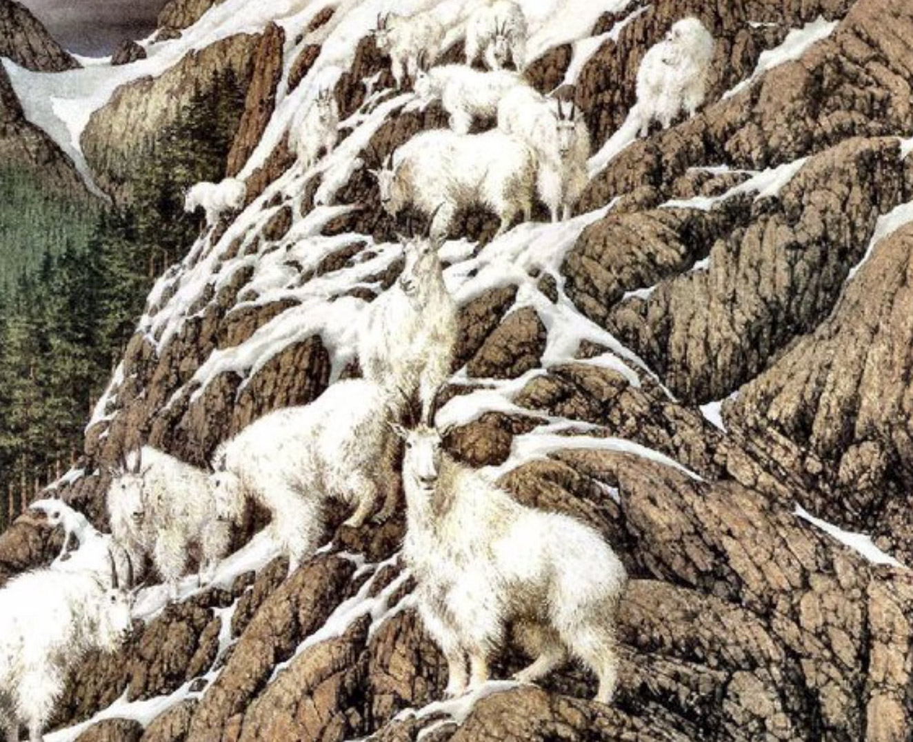 How many goats can you see?