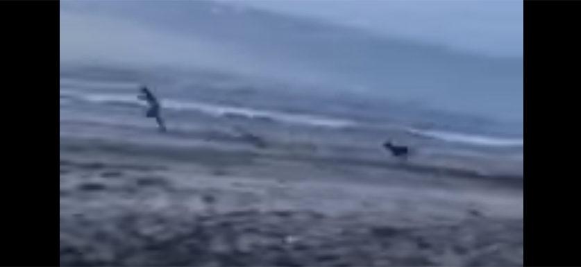 Dumbass tries to kick dog