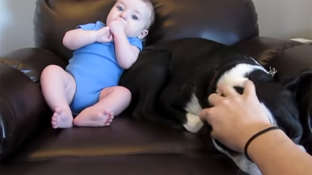Baby farts loudly and scares the dog