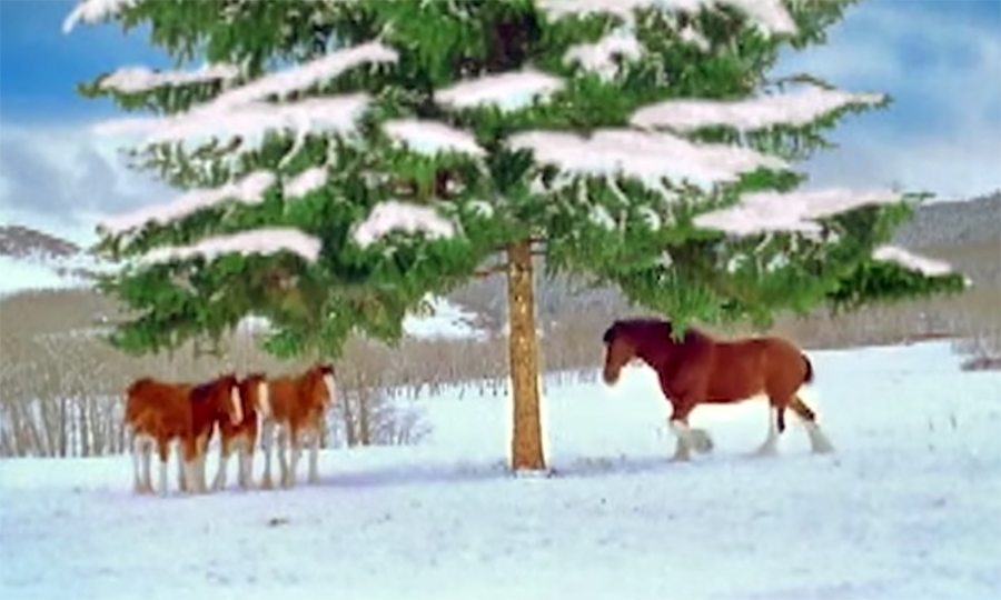 horses snowball fight 1