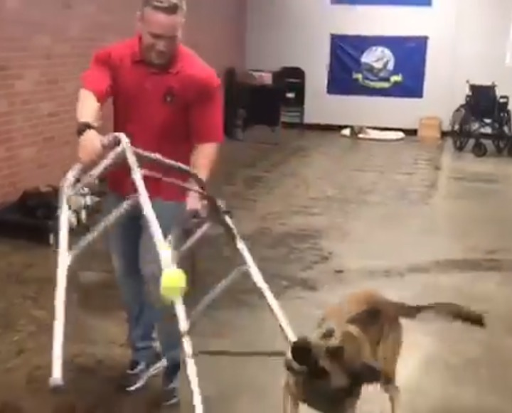 German Shepherd isn't fit to be a service dog 2