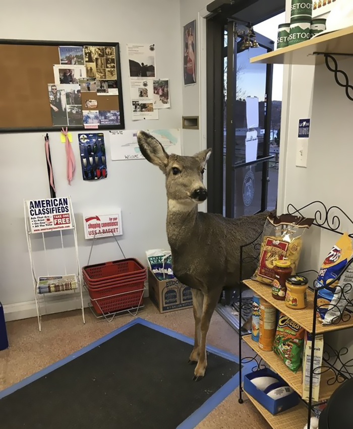 Deer walks with family into store 2