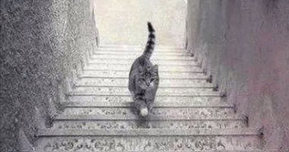cat stairs illusion