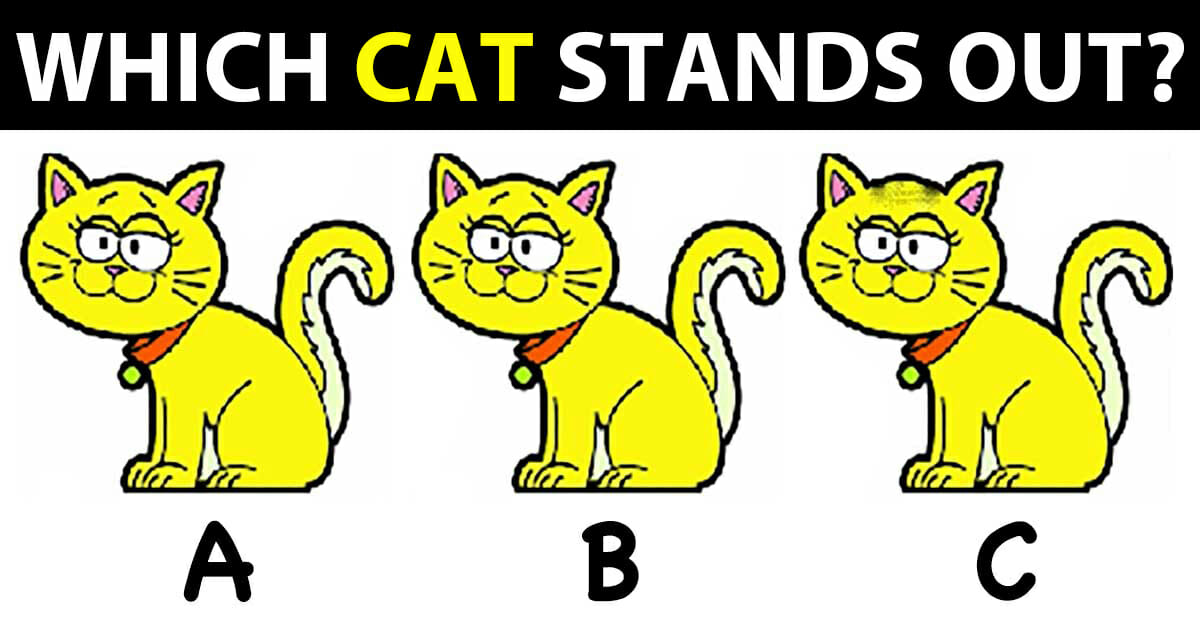 Which of these cats stands out?