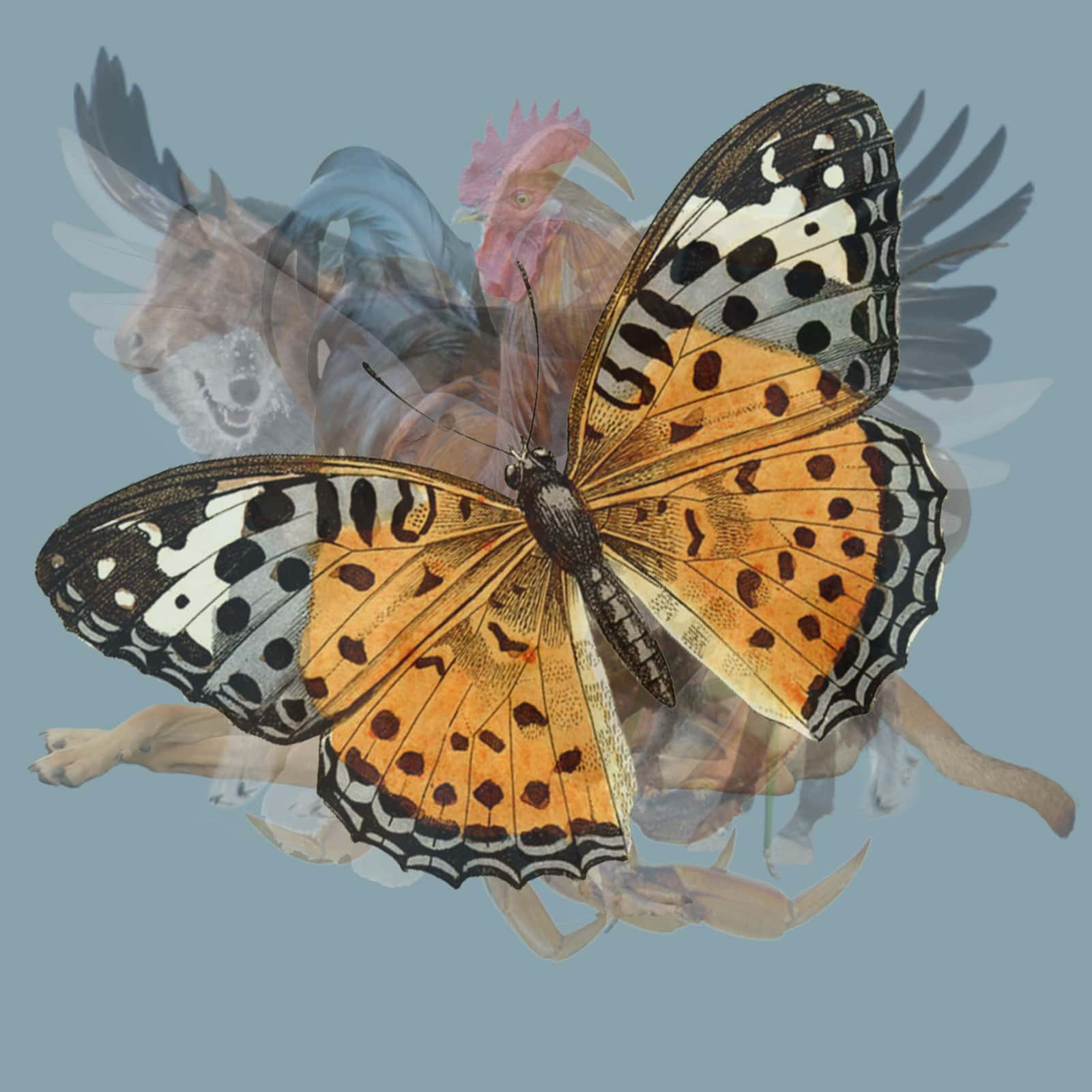 different animal butterfly
