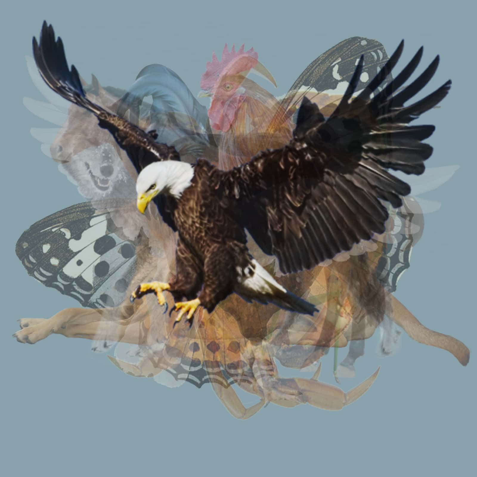 what animal eagle