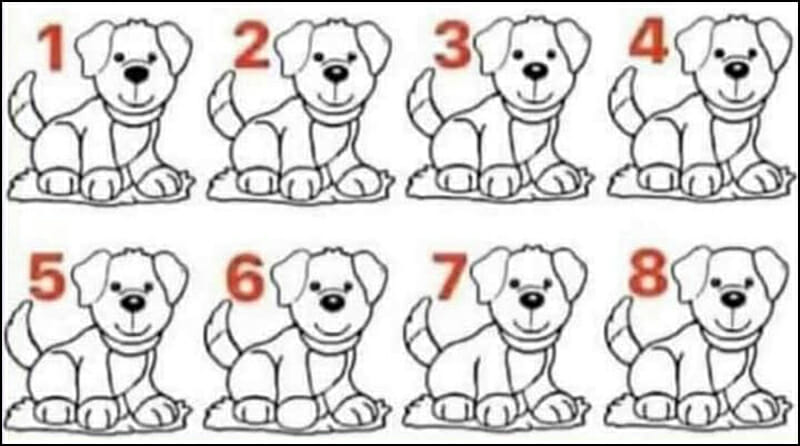 Which dogs stand out?