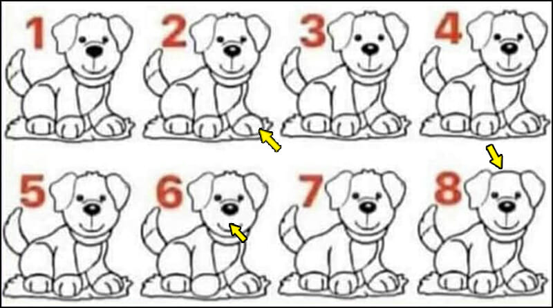 dogs solution