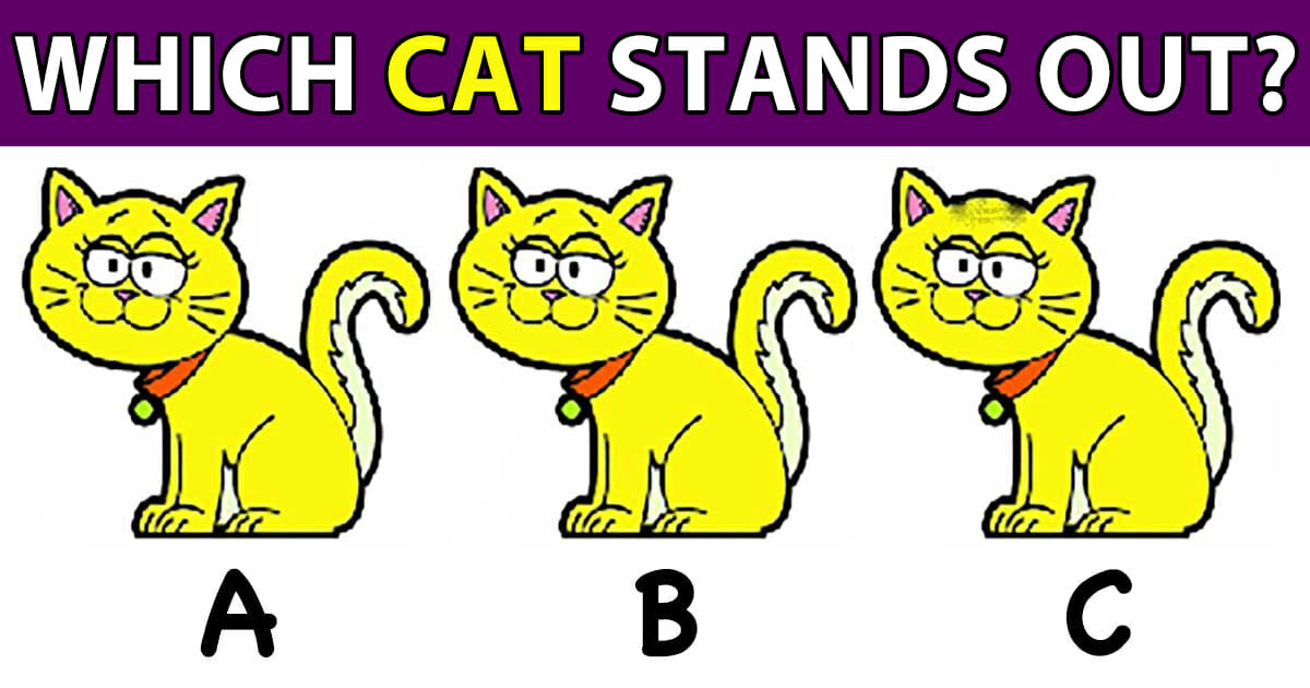 which cat stands out?