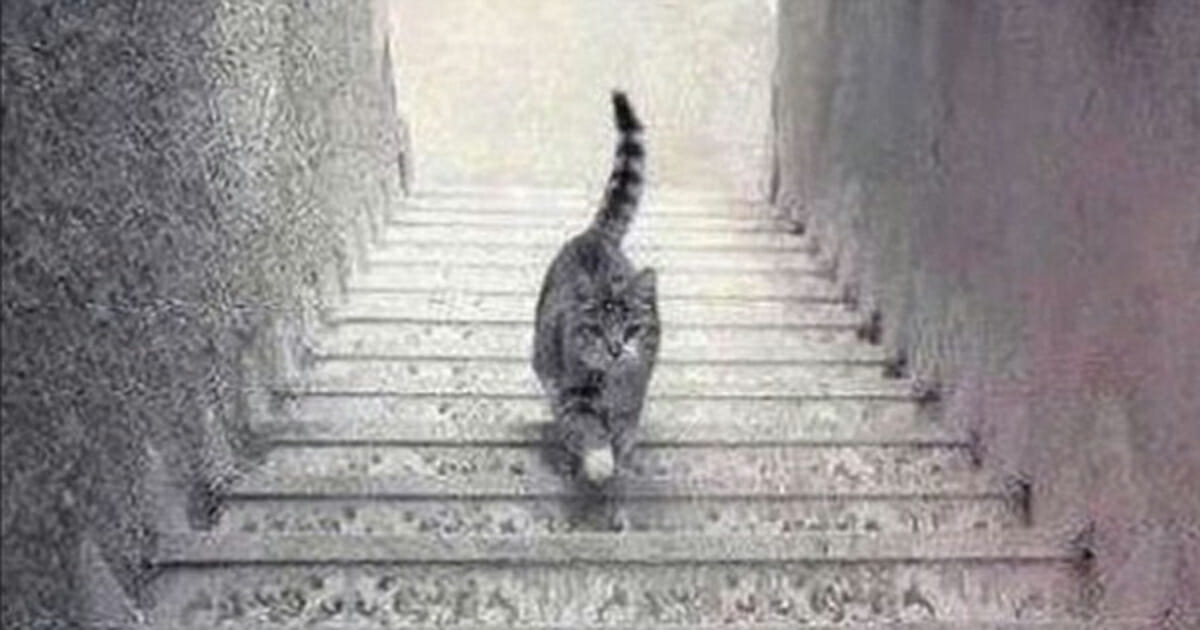 Cat walking up or down?